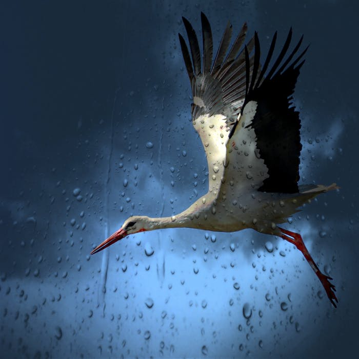 stork-bird-white-village